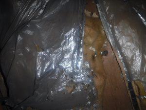 ボウケン ネズミ被害