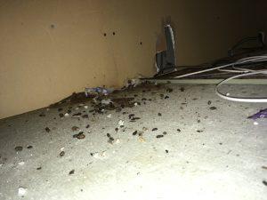 ボウケン ネズミ ネズミの糞