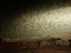 長押 壁の隙間 ネズミ
