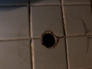 浴室 配管跡 ネズミ 防除研究所