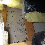 ネズミ 天井裏 ボウケン