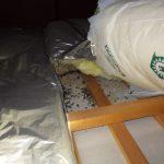 ネズミ被害 大量の糞 ボウケン